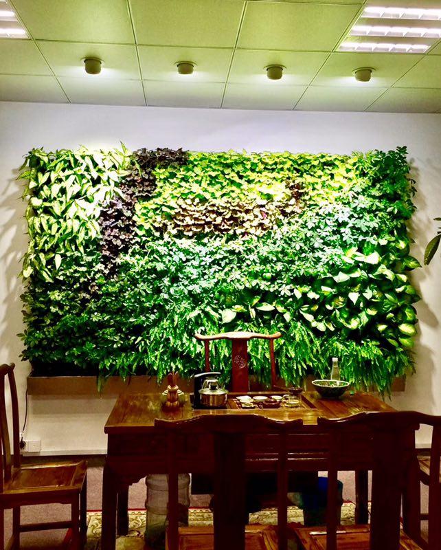 家装立体绿化