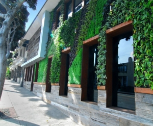 吉林门店立体绿化