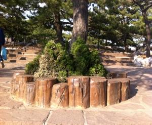 大连仿木树池