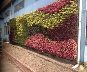 大连室外植物墙