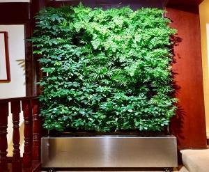吉林店铺绿化