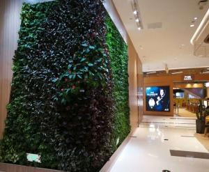 吉林植物墙