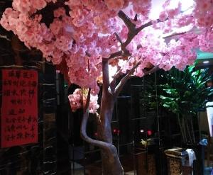 樱花树盆景