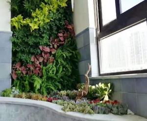 吉林大连立体绿化