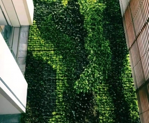 大连绿植墙