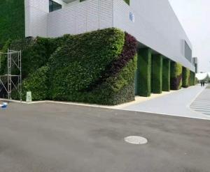 大连墙体绿化